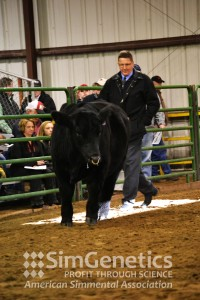 Tom Hook evaluating bulls in the Pen of Five Bull Show