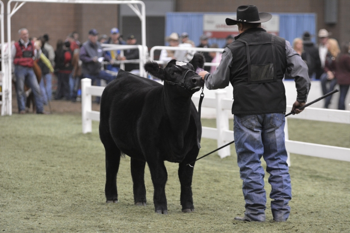 Full Results from the 2014 American Royal Open Shows