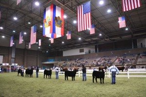 American Royal Simmental Show