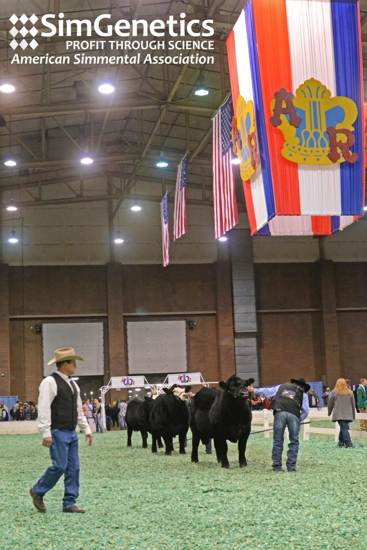2015 American Royal Open Simmental ShowResults
