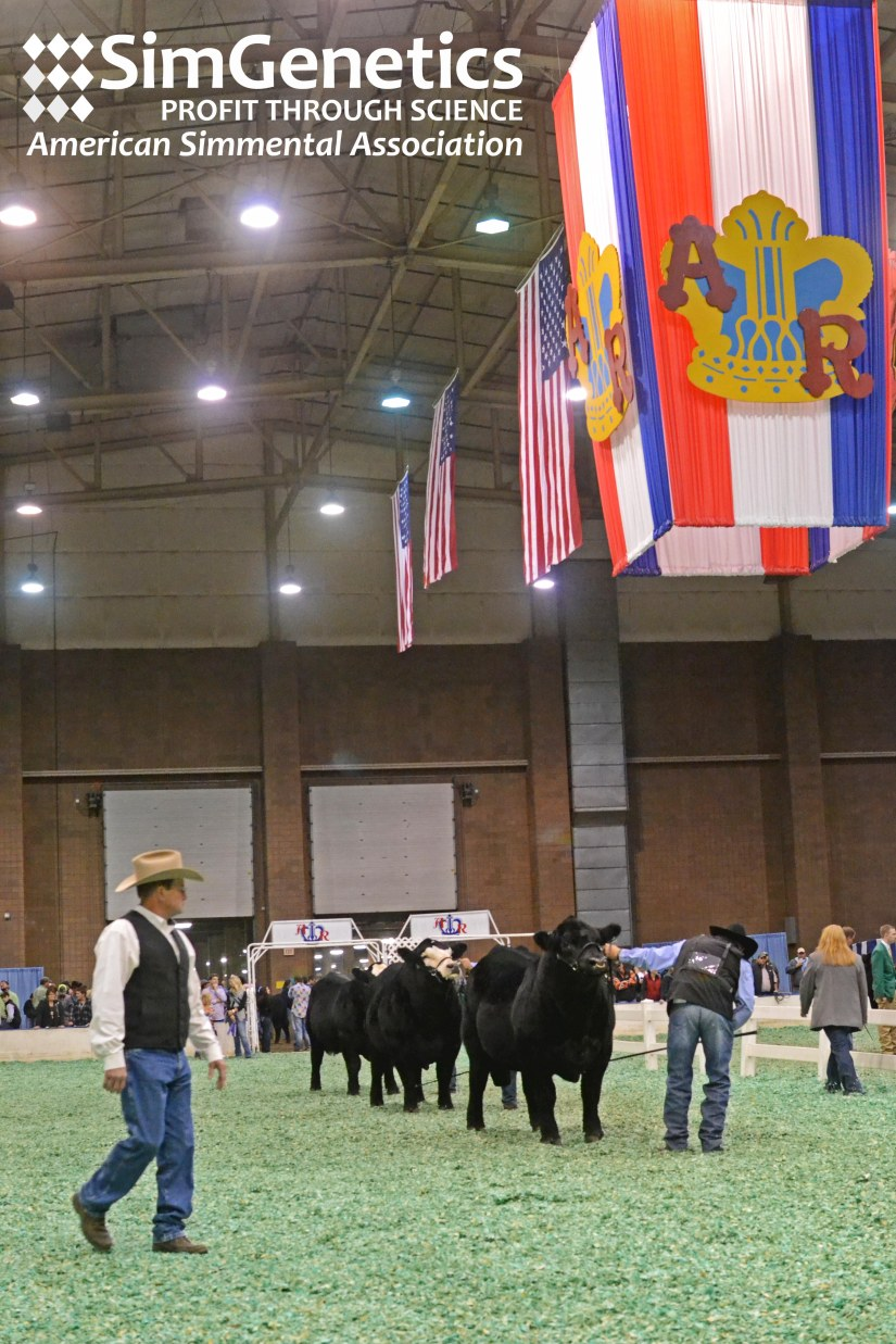 2015 American Royal Open Simmental Show Results